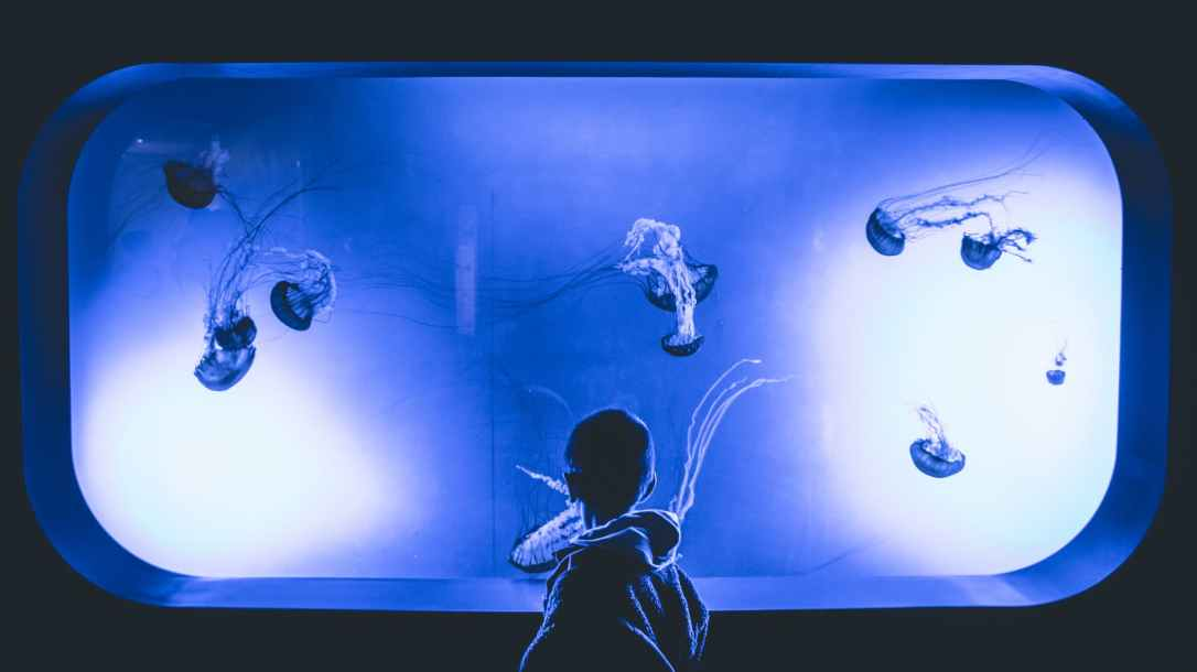 boy standing in front of jelly fish aquarium with purple light